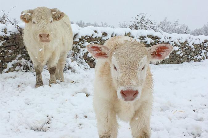 Nieve, animales y naturaleza, el cóctel perfecto en El Capriolo